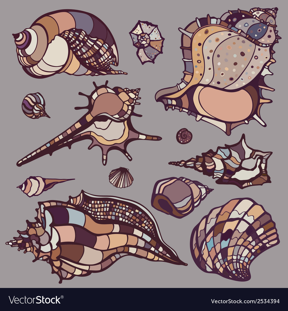 Sea shells set vector | Price: 1 Credit (USD $1)