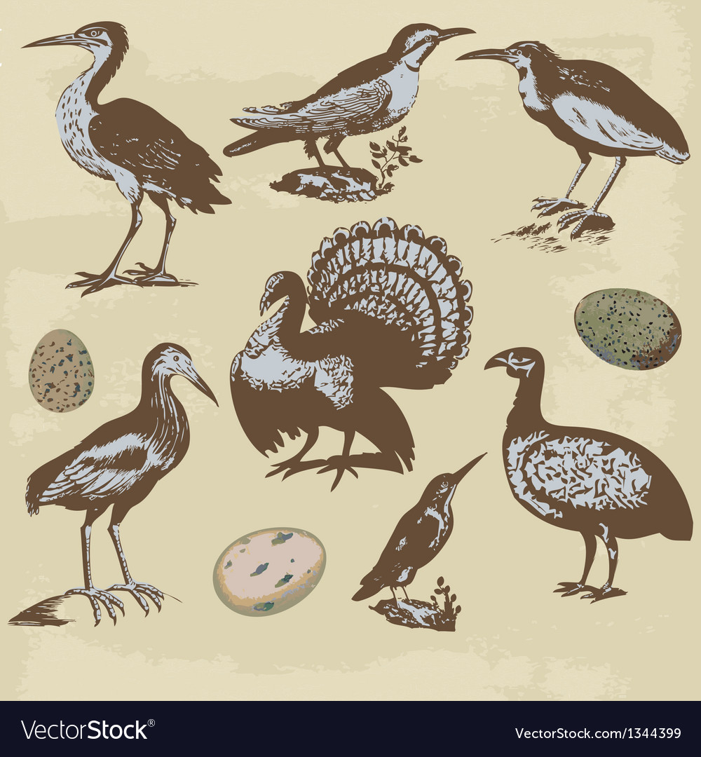 Vintage birds  set vector | Price: 1 Credit (USD $1)
