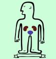 Human body kidneys and bladder vector