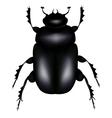 Scarab beetle vector