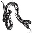 Big snake vector