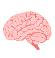 Pink brain side view vector