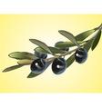 Olive branch vector