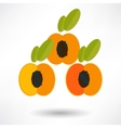 Apricot icon with shadow in flat design vector