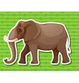 Elephant vector