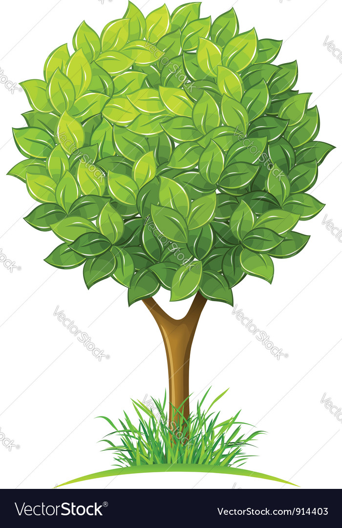 Tree with green leaves vector | Price: 3 Credit (USD $3)