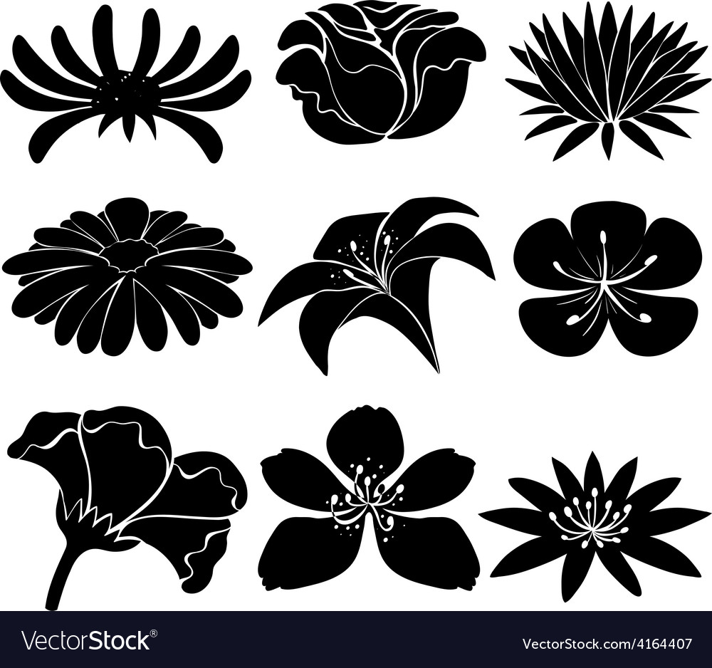 Set of black flowers vector | Price: 1 Credit (USD $1)