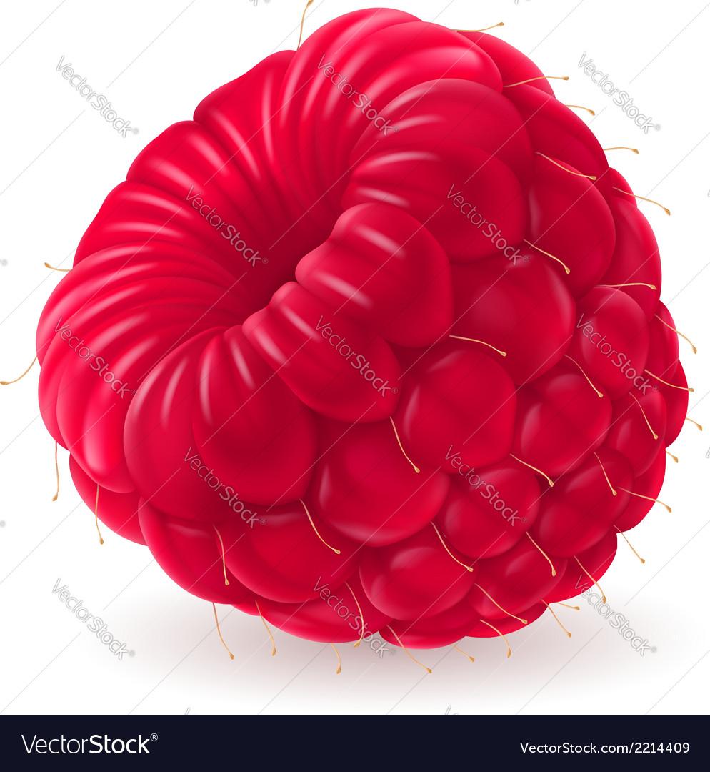 Appetizing fresh raspberry vector   Price: 1 Credit (USD $1)