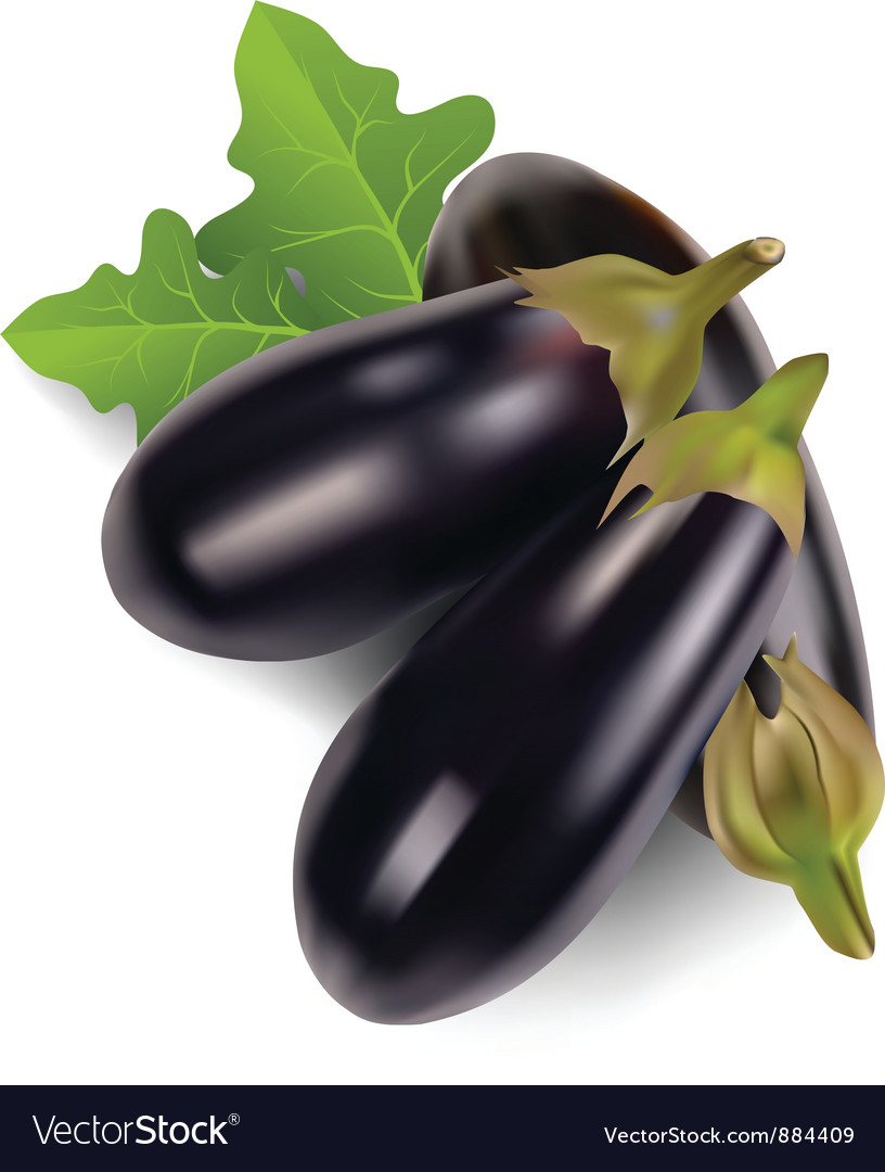 Egg plant vector | Price: 1 Credit (USD $1)