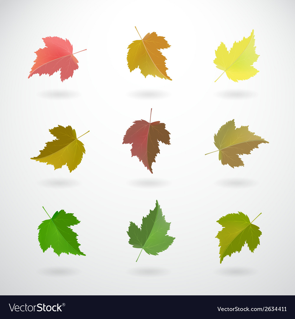 Collection of currant leaves vector | Price: 1 Credit (USD $1)