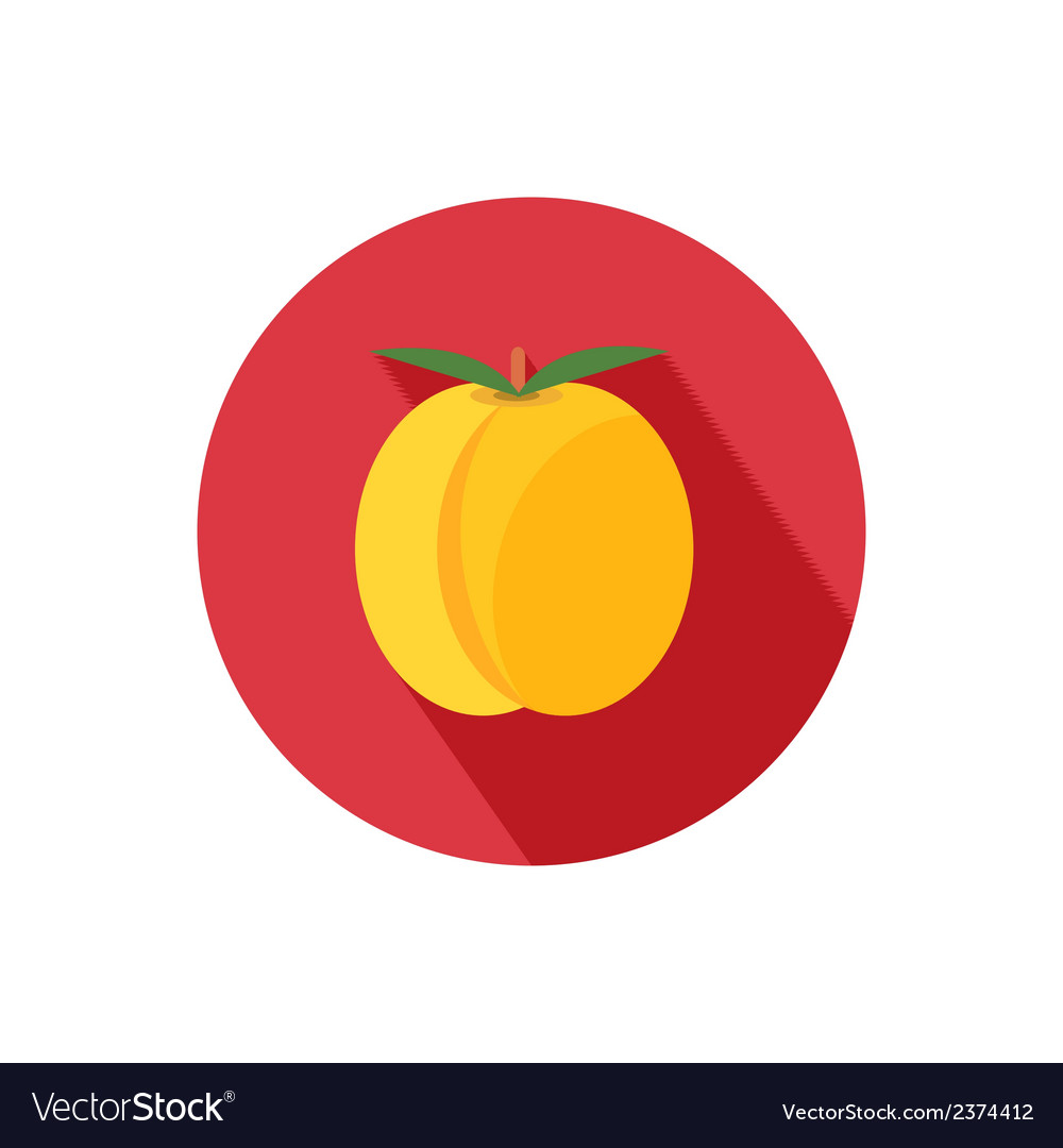 Apricot icon vector | Price: 1 Credit (USD $1)