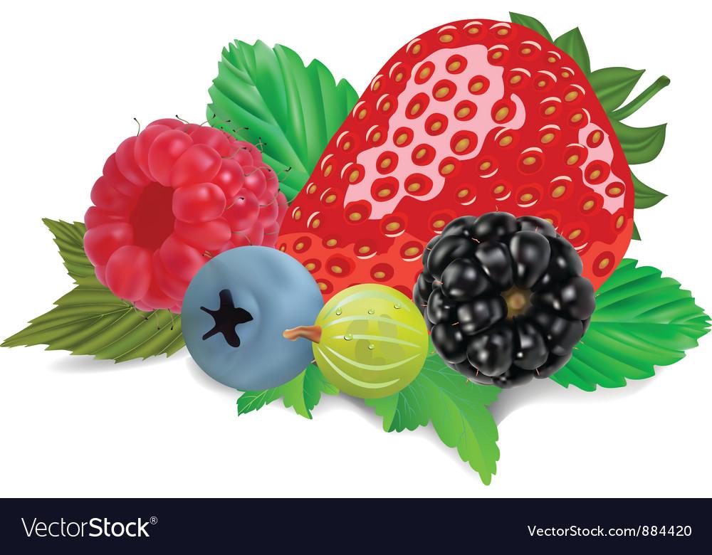 Mixed summer berries vector | Price: 1 Credit (USD $1)