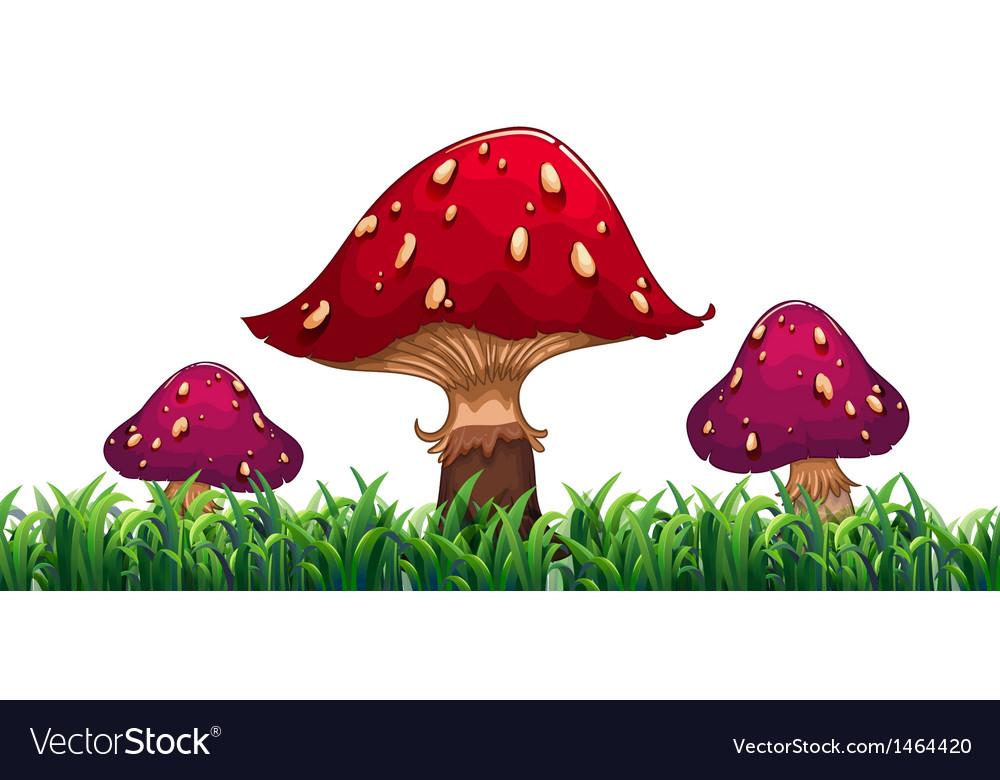 Three mushrooms vector   Price: 1 Credit (USD $1)