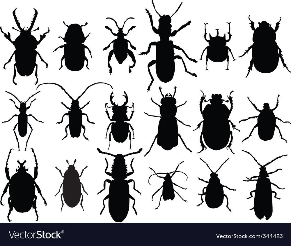 Beetles vector | Price: 1 Credit (USD $1)