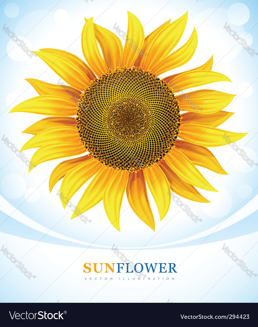 Sunflower vector | Price: 3 Credit (USD $3)