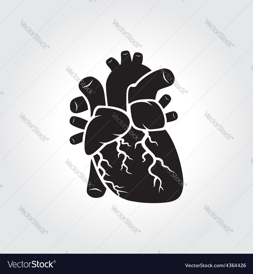 Heart anatomy symbol vector | Price: 1 Credit (USD $1)