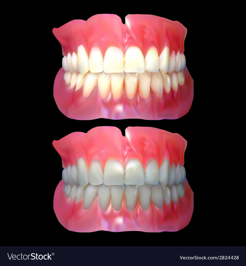 Jaw tooth jaw vector | Price: 1 Credit (USD $1)