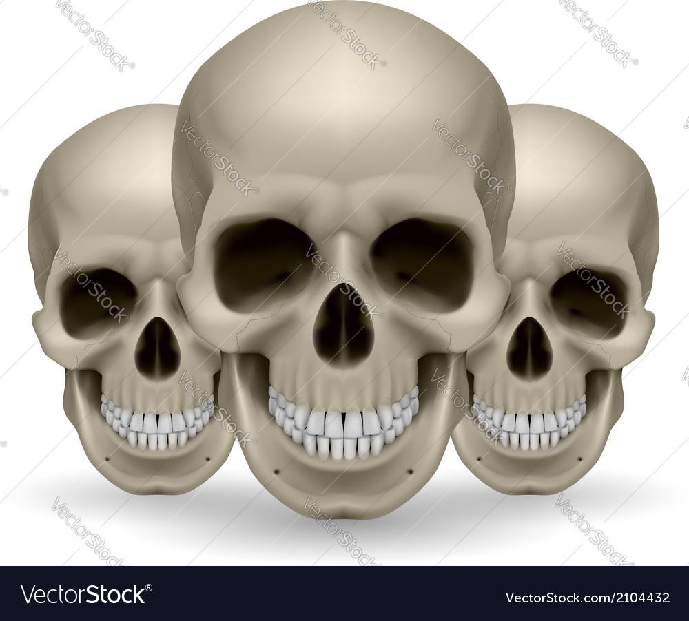 Three skulls vector   Price: 1 Credit (USD $1)