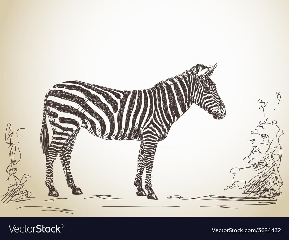 Zebra vector | Price: 1 Credit (USD $1)