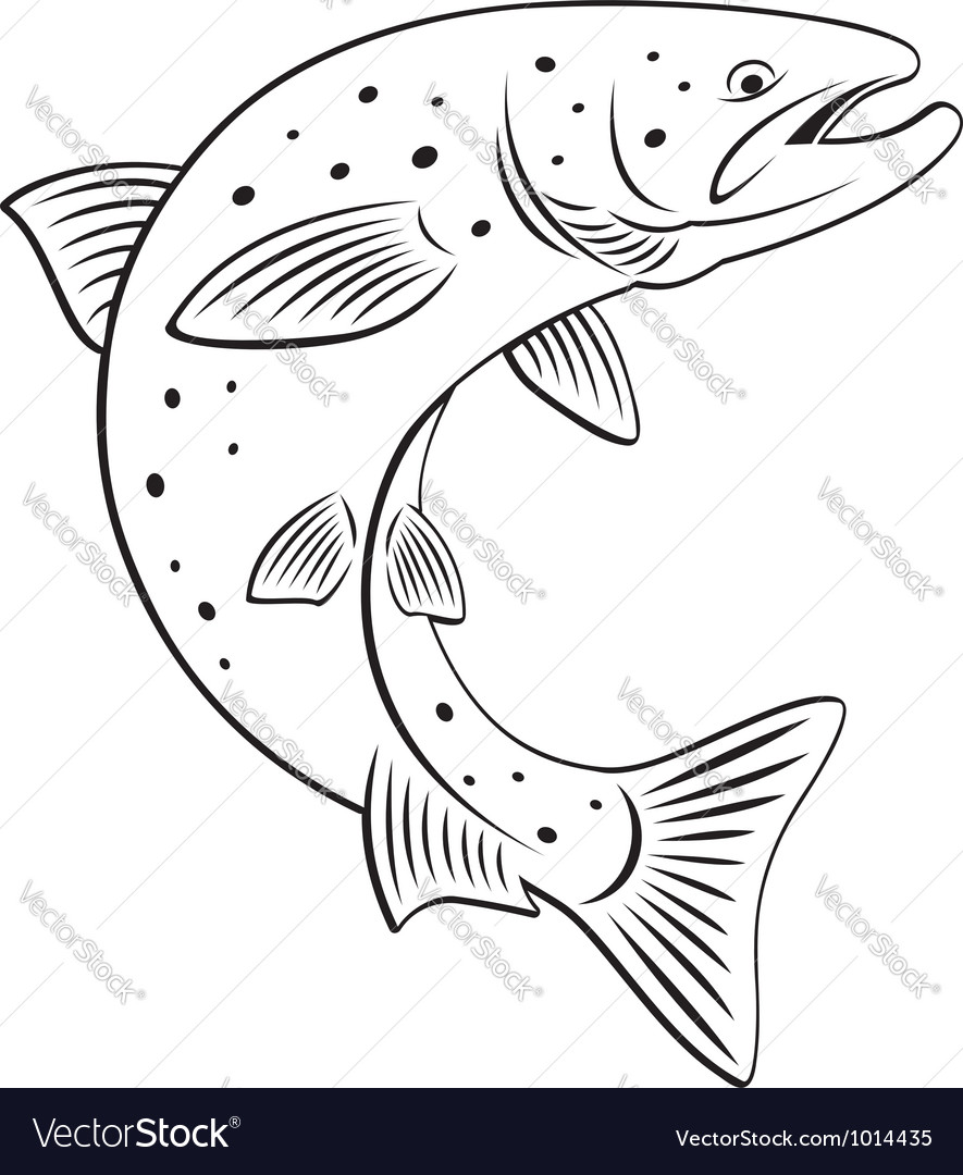 Salmon vector | Price: 1 Credit (USD $1)