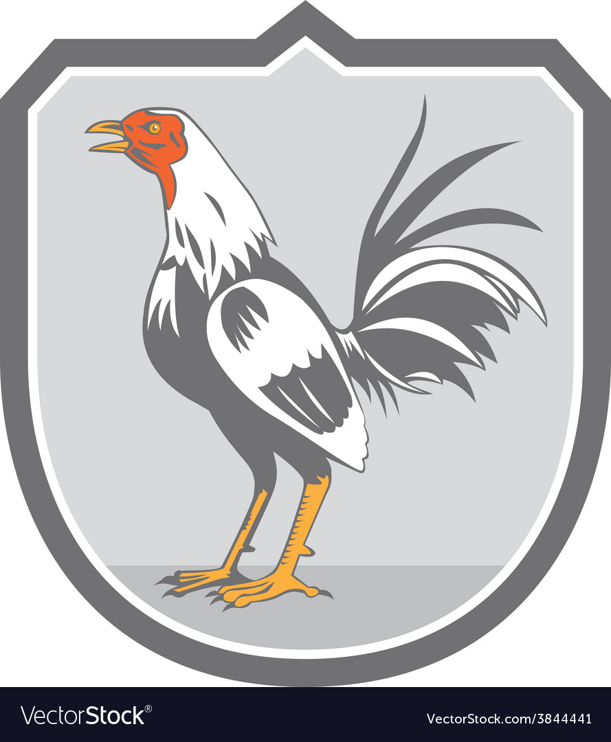 Cockerel rooster standing shield retro vector | Price: 1 Credit (USD $1)