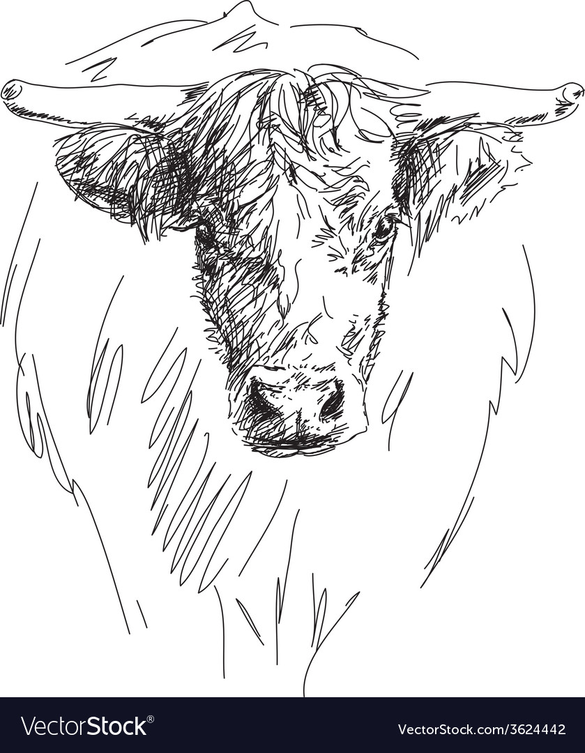 Sketch of bull head vector | Price: 1 Credit (USD $1)
