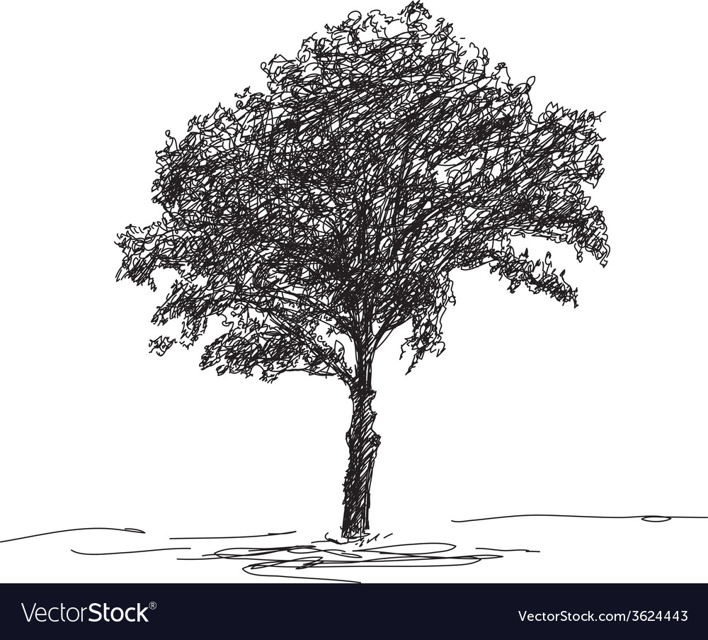 Sketch of isolated tree vector | Price: 1 Credit (USD $1)