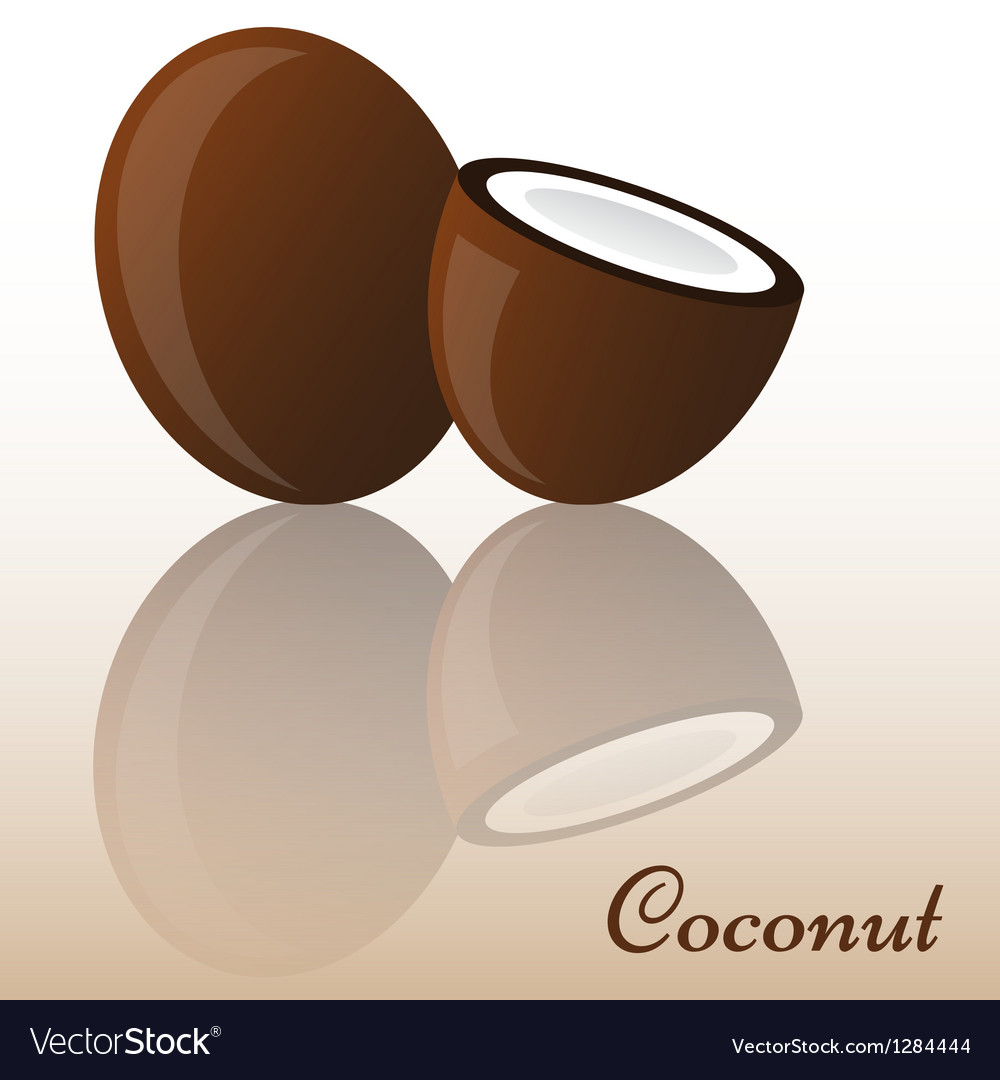 Coconut vector | Price: 1 Credit (USD $1)