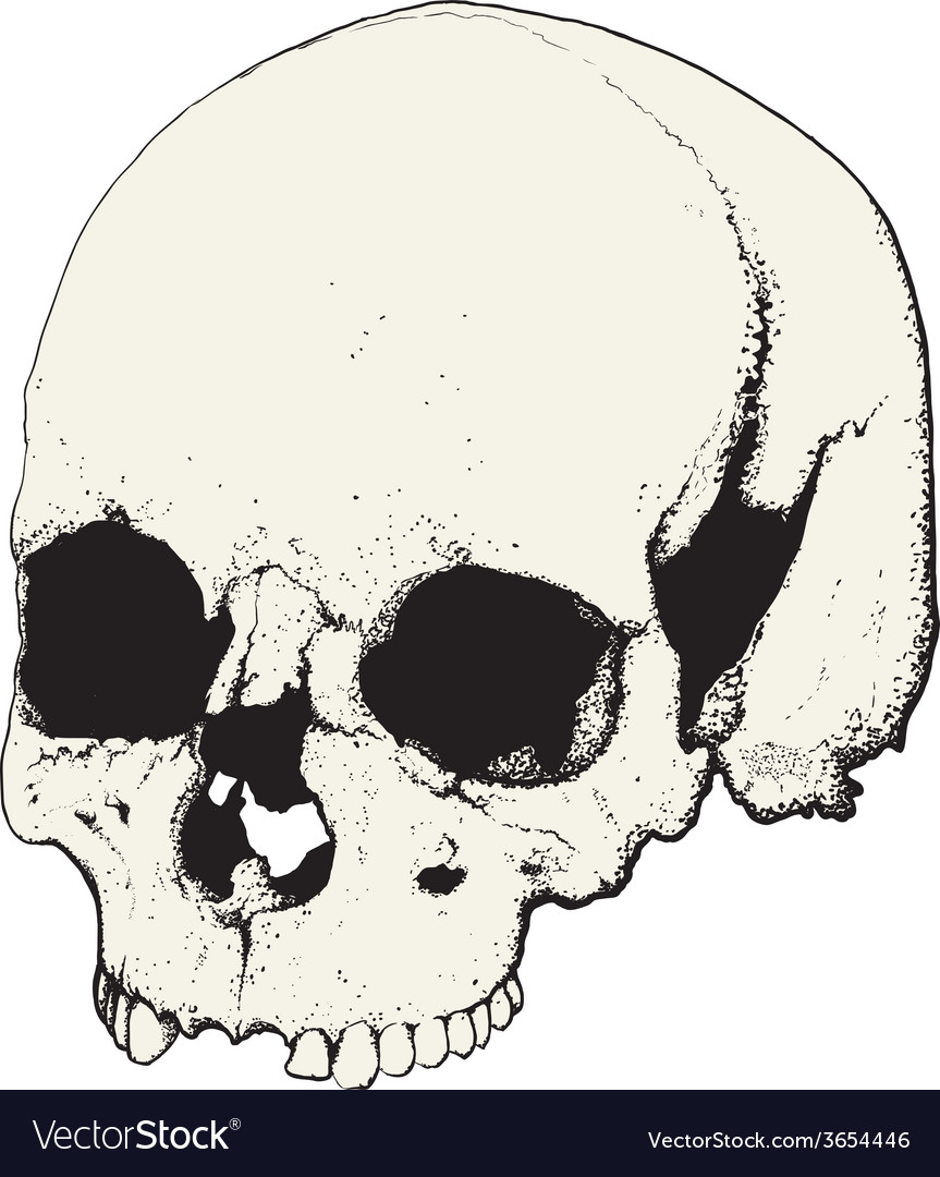 Skull in profile vector | Price: 1 Credit (USD $1)