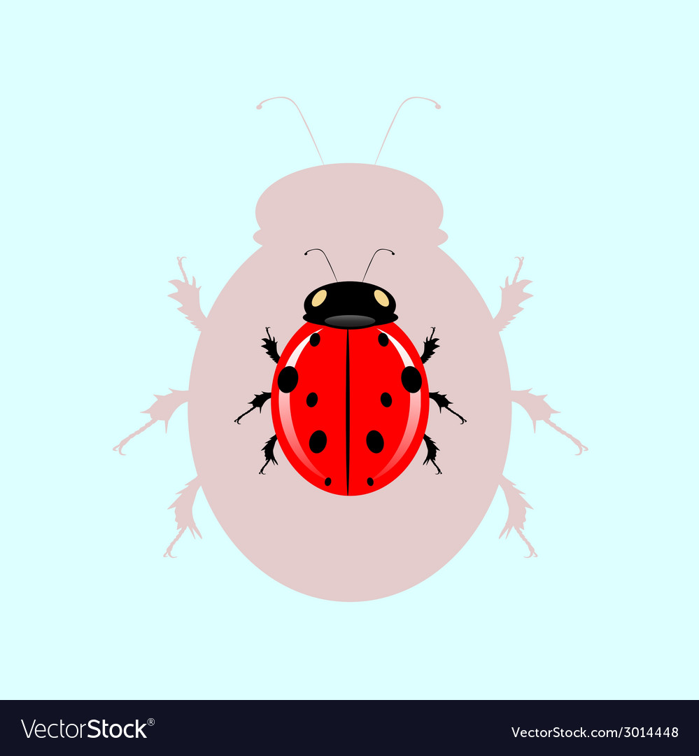 Ladybug the blue waters and its shadow vector | Price: 1 Credit (USD $1)