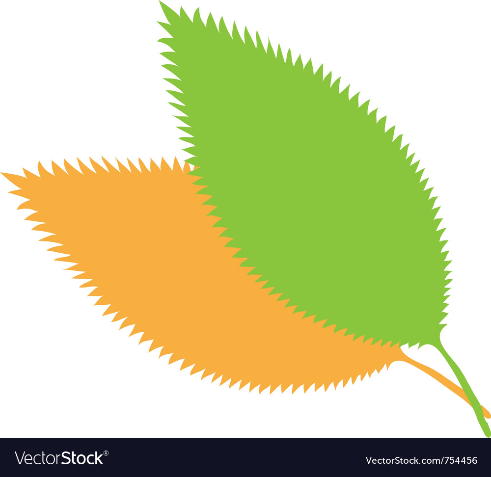 Fall leaves  nature vector