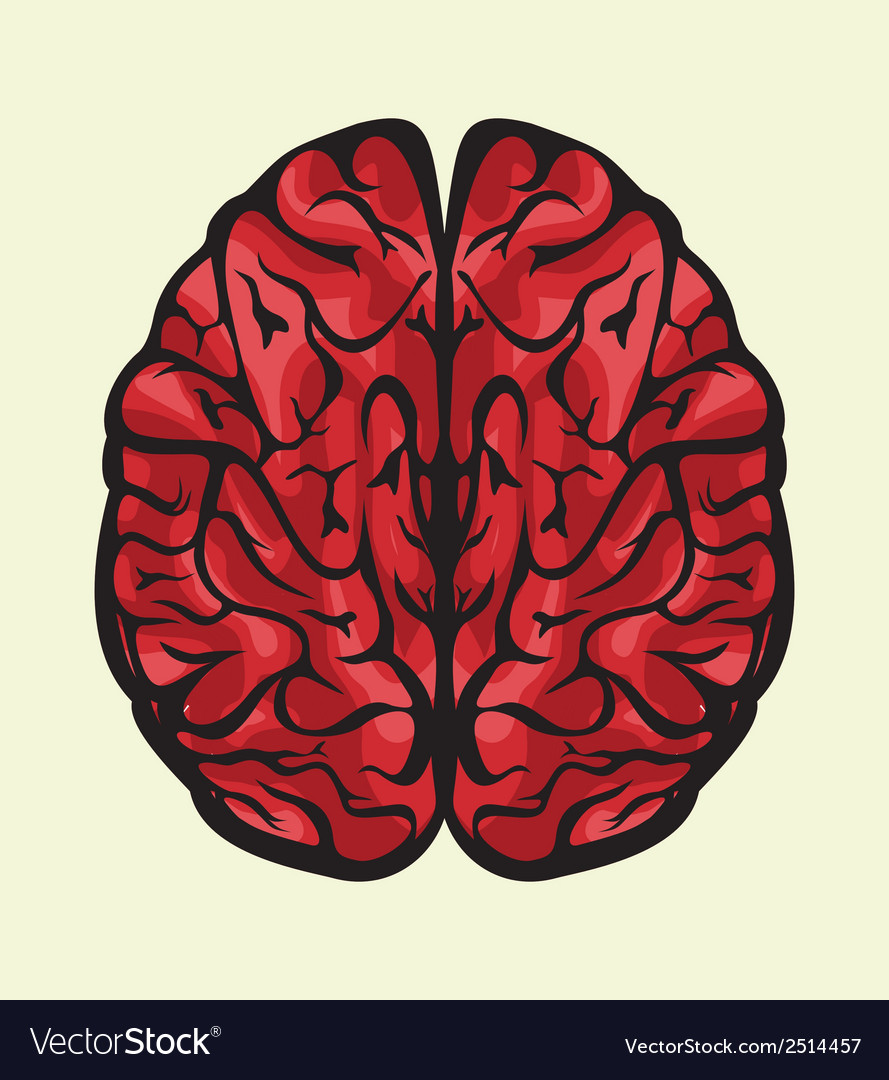 Mozak odozgocolor vector | Price: 1 Credit (USD $1)