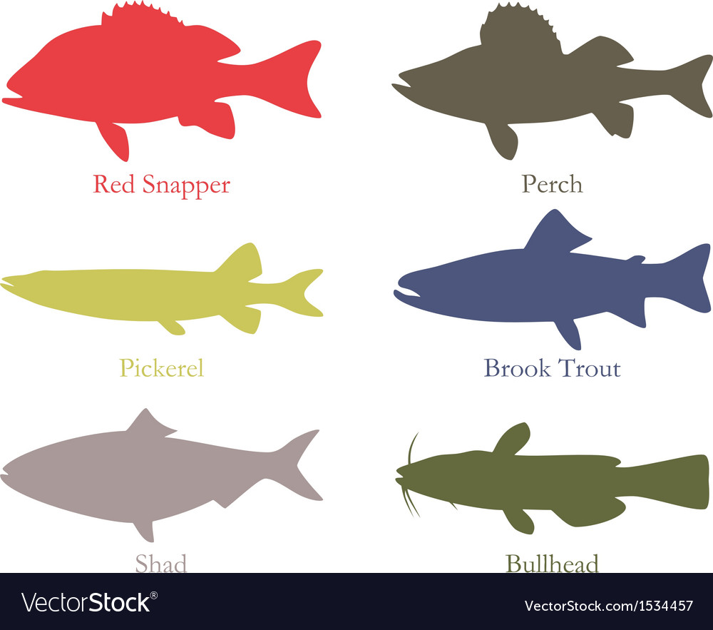 North american food fish vector | Price: 1 Credit (USD $1)