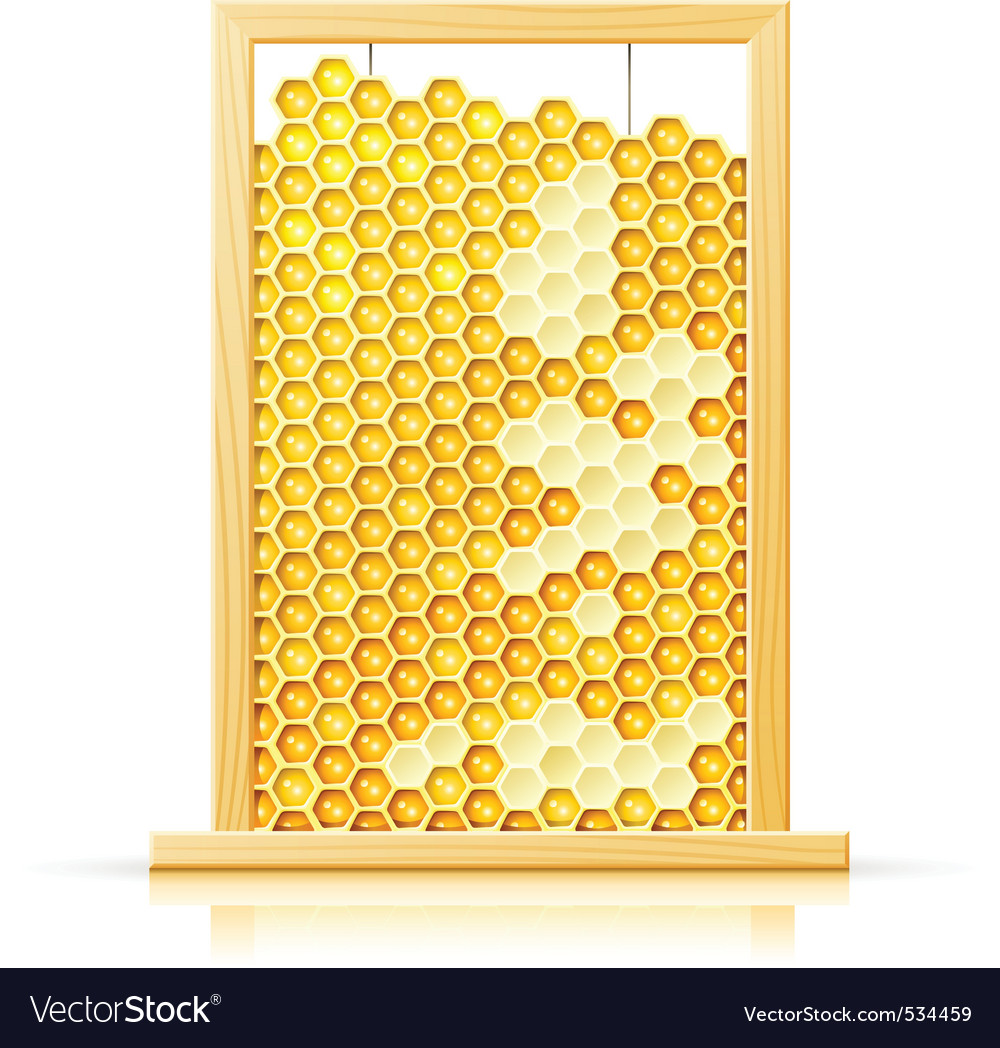 Bee honeycomb in frame vector | Price: 3 Credit (USD $3)