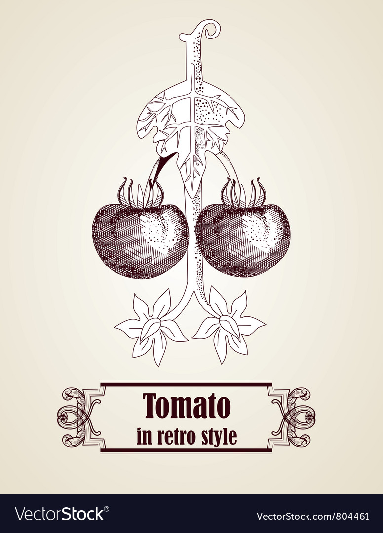 Hand drawn tomato vector | Price: 1 Credit (USD $1)