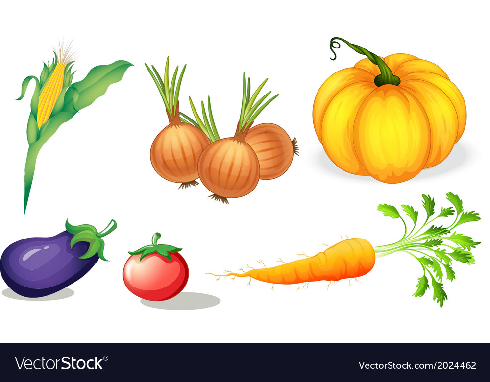 Healthy vegetables and spices vector | Price: 1 Credit (USD $1)