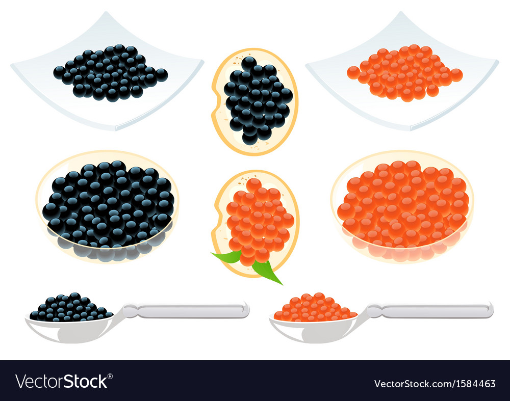 Red and black caviar vector | Price: 1 Credit (USD $1)