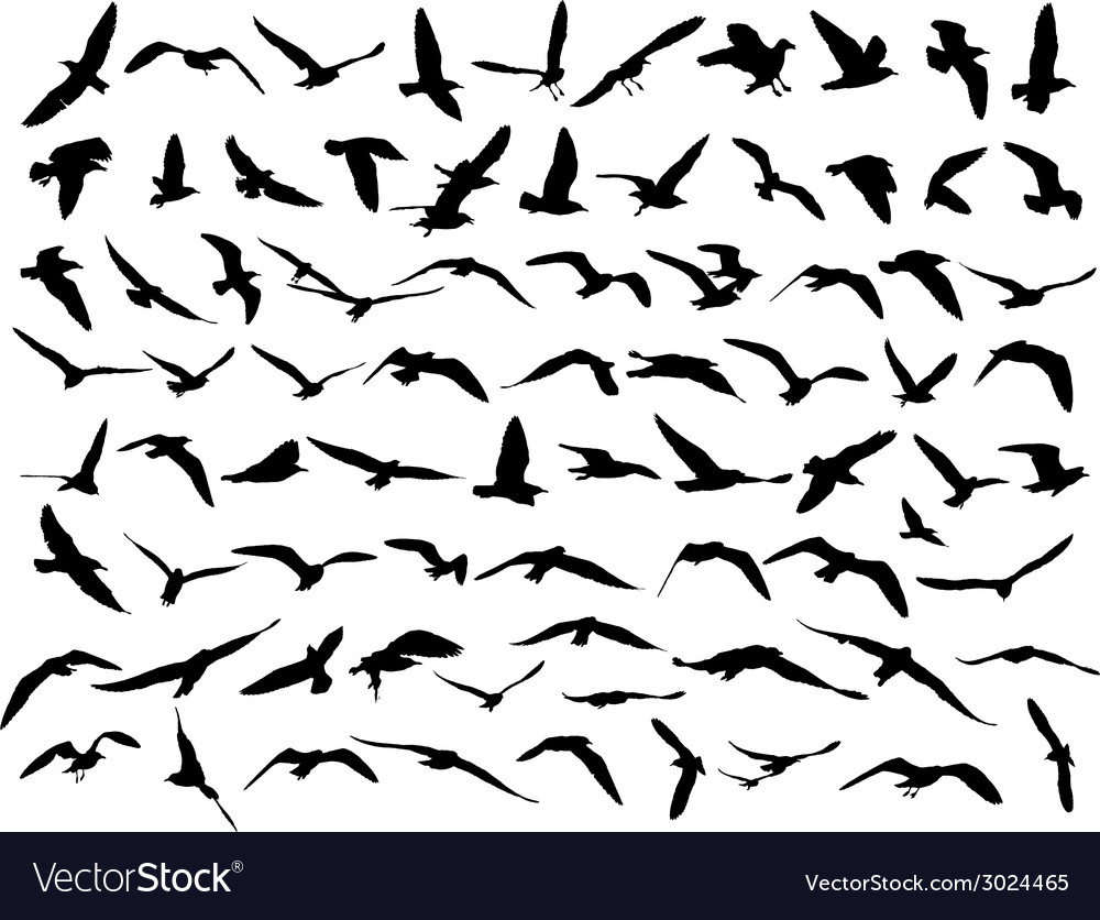 Bird seakull vector | Price: 1 Credit (USD $1)
