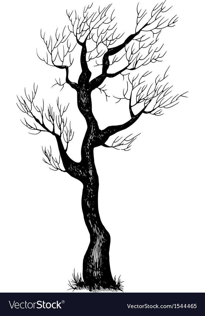 Eps 10 of hand drawn tree vector | Price: 1 Credit (USD $1)