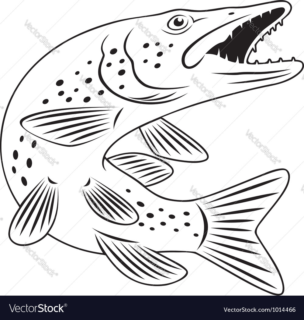 Pike fish vector | Price: 1 Credit (USD $1)