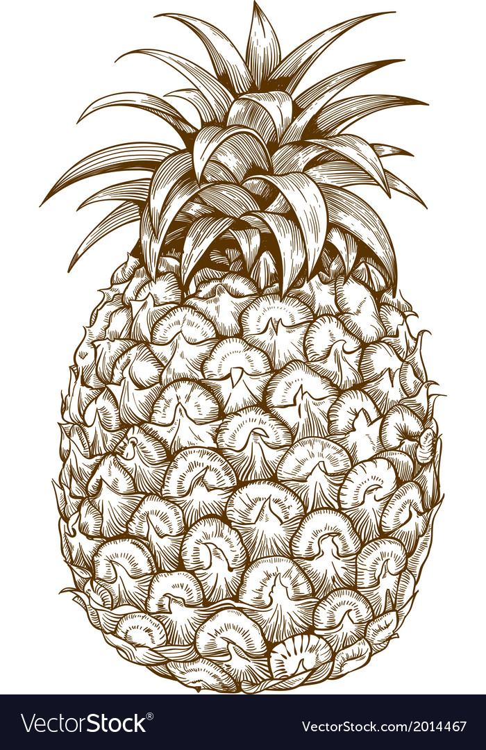 Engraving pineapple vector | Price: 1 Credit (USD $1)