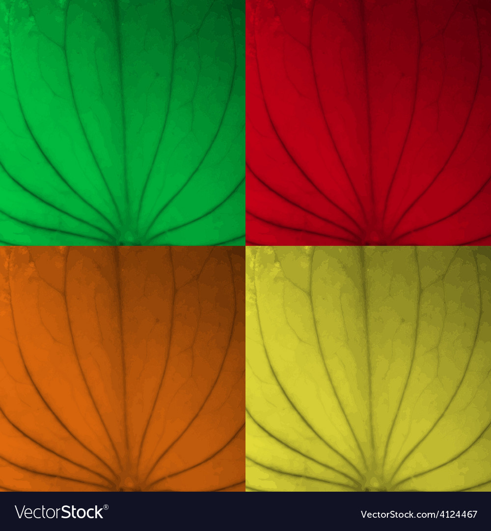 Leaf texture four color set vector | Price: 1 Credit (USD $1)