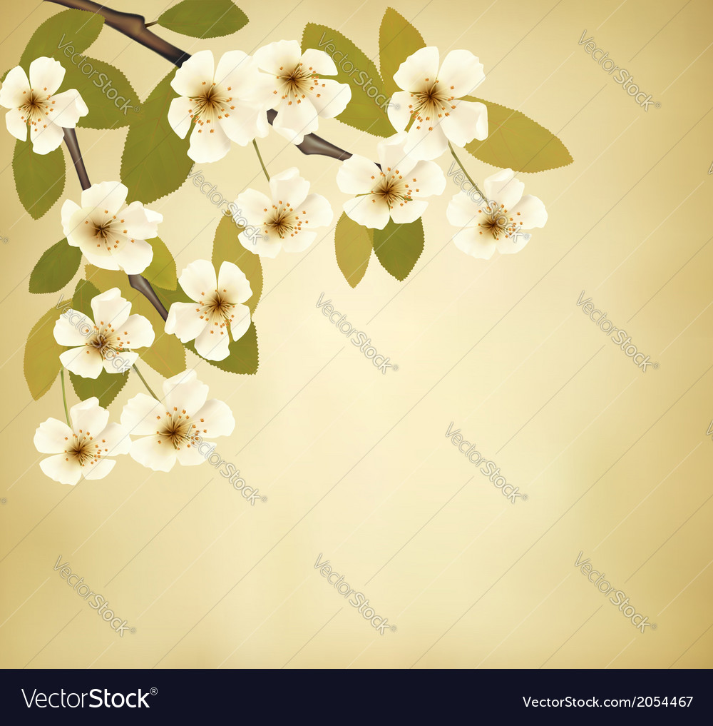 Vintage background with blossoming tree brunch and vector | Price: 1 Credit (USD $1)