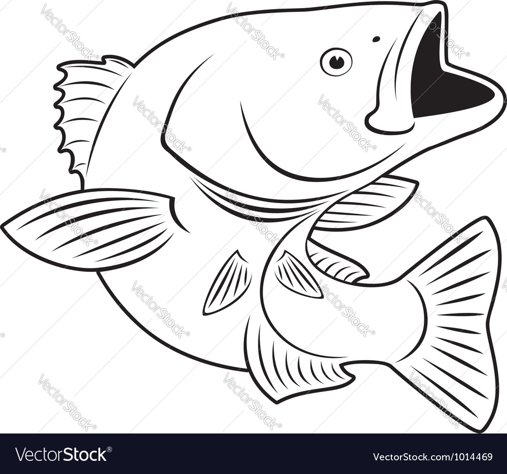Sriped bass fish vector | Price: 1 Credit (USD $1)