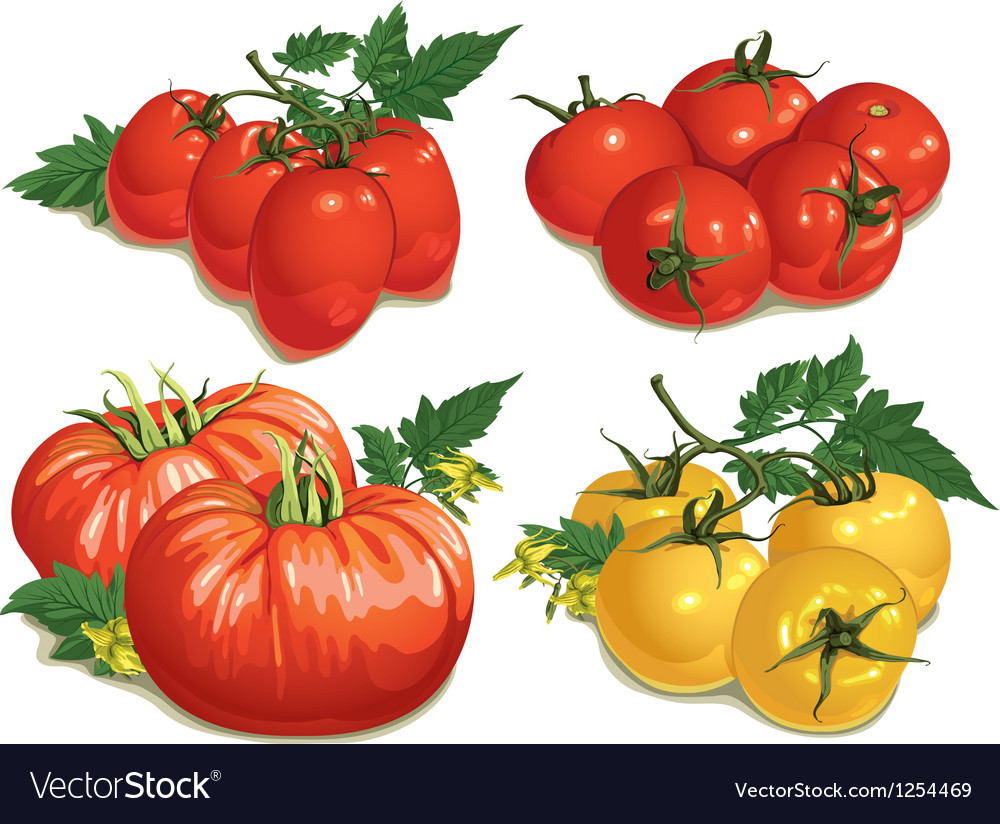 Tomatoes vector | Price: 3 Credit (USD $3)