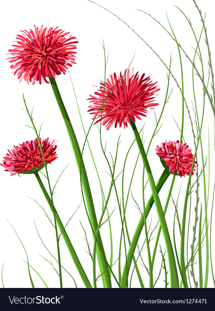 Beautiful wild flowers vector | Price: 1 Credit (USD $1)