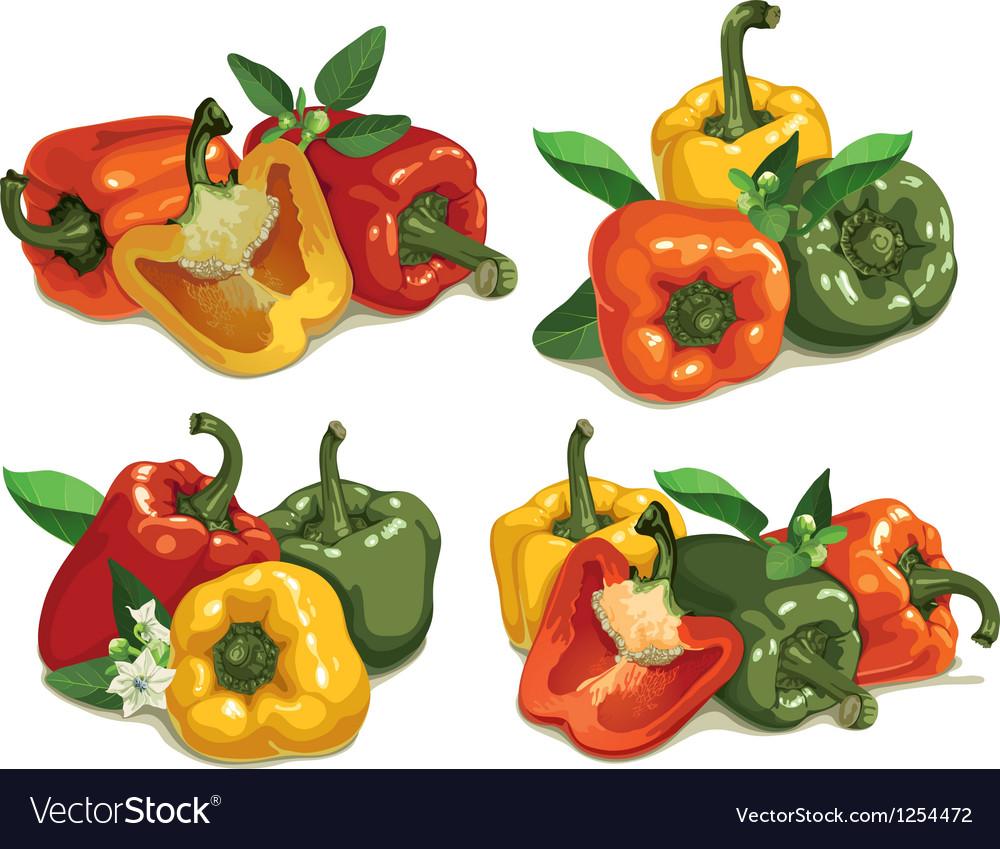 Capsicum peppers vector | Price: 3 Credit (USD $3)