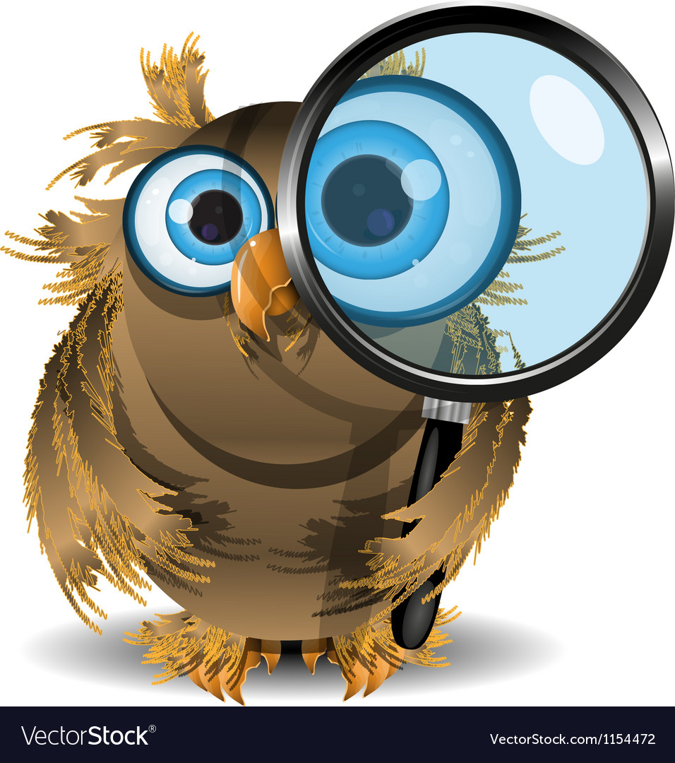 Curious owl vector | Price: 1 Credit (USD $1)