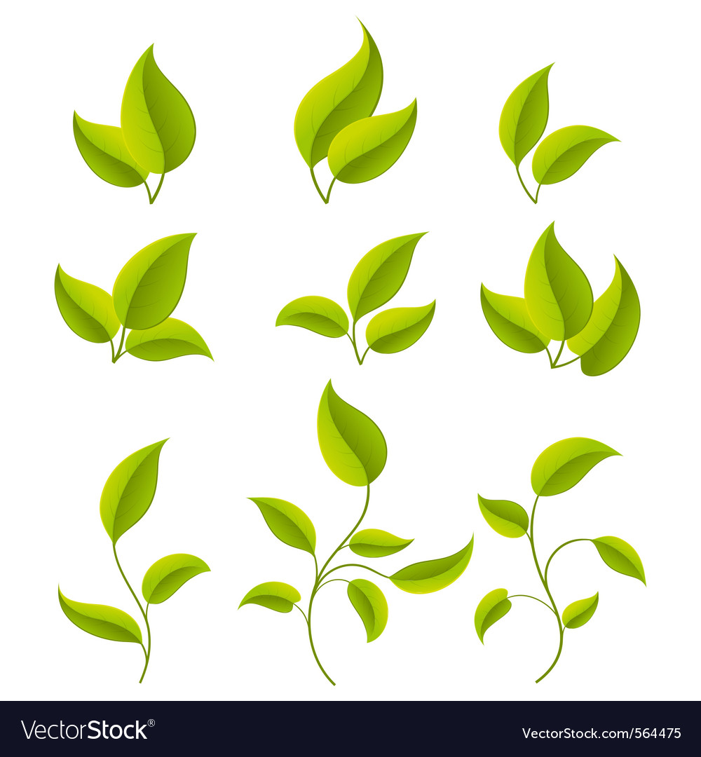 Green leaves set vector | Price: 1 Credit (USD $1)