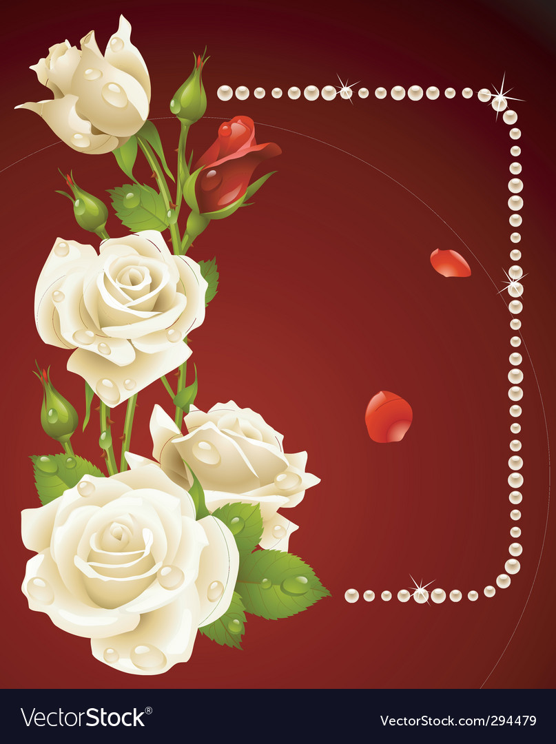 White rose and pearls vector | Price: 1 Credit (USD $1)